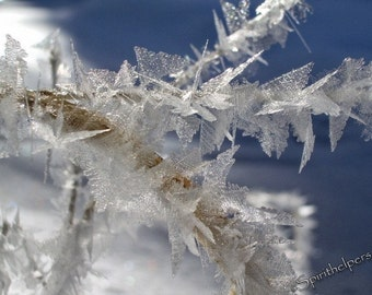 Ice Crystals, Winter Frost, Winter's Flowers, Like Wings Frozen in Time, Winter Beauty six Greeting Cards, Fine Art Photography
