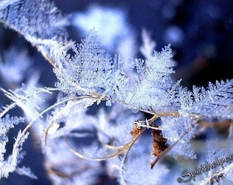 Delicate Winter Crystals, Winter's Flowers, Fairy Wings, Angel Wings, Crystal Forest, Photograph or Greeting card