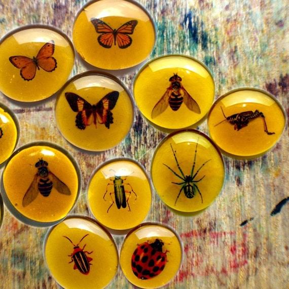 Custom Insect Mega Magnets \/ Entomology