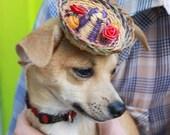 Aiii Chihuahua-Leetle Party Sombrero for your little Tea Cup Chihuahua- Aiii Chihuahua. baile del sombrero. folkorico dance.