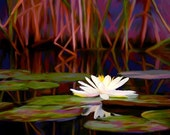 Lilly Pond digital painting by Christine MacLellan