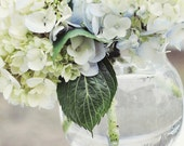 Home Decor Photo 8x8 Winter Hydrangea