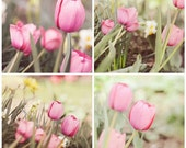 Fine Art Photography Pink Spring Tulip Set 4 8x8 Prints