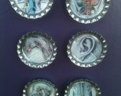 SALE Gothic Anatomy Body Bottle Cap Super Strong Magnets set of 6