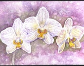 Orchid ACEO- LRutherford Original Miniature Watercolour