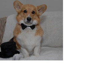 Dog Bow Tie: For Your Wedding To Include Your Awesome Pup or Kitty miascloset