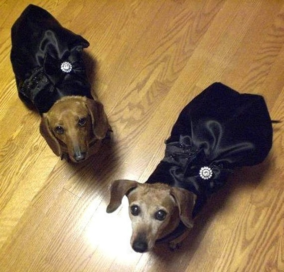 Custom Wedding Dress: For Your Pup