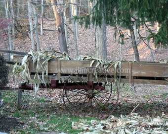COUNTRY WAGON Art Photo 8 x 10 Photograph Nature Dried Corn Stalks