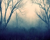 Just Me and the Woods - Fog Photography - Nature Photo -  tree forest mist blue pink contemporary - decorative print