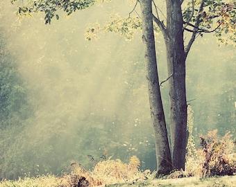 Breaking Through - Ethereal Photography - Tree and Sunburst Photo - Optimistic Image  - Decorative Print
