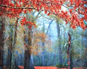 Fairytale Photography, Red Decor, Passionate Earth, Misty Fairytale Landscape, Fog Photography, Home Decor, Magical Photo,