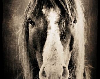 Horse Portrait in Sepia, Equine Photography, Animal Photo, Personification, Ranch Decor, Gift Idea for Horse Lover