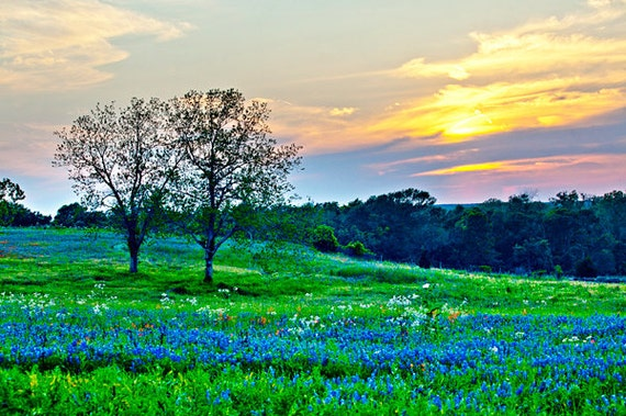 Sun Setting on Another Texas Day - Texas Landscape Photography - Nature Photos - Springtime Bluebonnets - Sunset