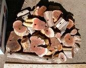 Manzanita coins and pieces, make your own bird toys