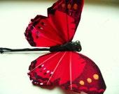 butterfly butterfly my love