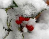 Holly Berries Photo Notecard