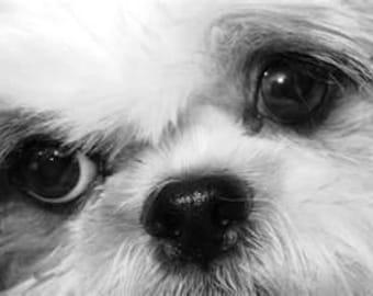 Puppy Face Cross Stitch Pattern PDF