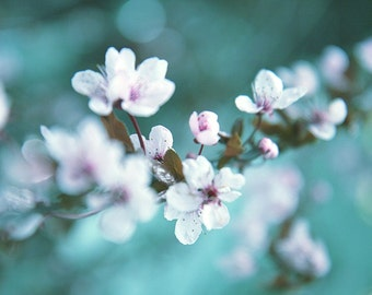 home decor wall art, fine art flower photography, dreamy floral art print, cherry blossom spring
