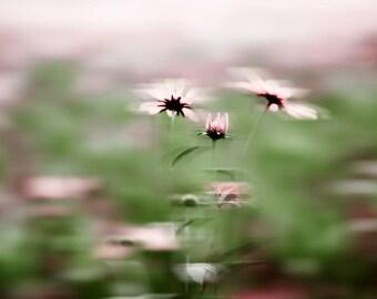 """Landscape photography, fine art nature photography, flower nature photograph, """"lavender dream"""" home decor"""