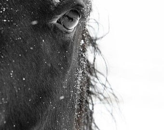 Horse Photograph - black and white horse photography - 8x10 black horse photo, winter horse - eye relflection, nature