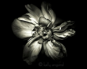 botannica obscura 4...botanical fine art photography by kelly angard