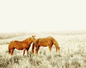 Horse photograph, fine art horse photography - 8x8 two wild horses photo, rustic dreamy landscape - love, couple together