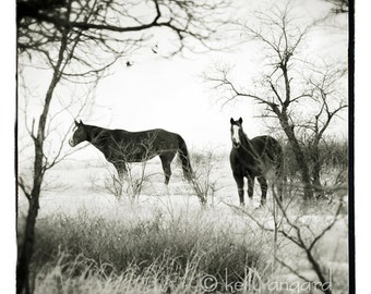 Horse Photography, black and white Horse Photograph - two horses, landscape, woodland, trees