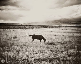 Horse Photography - black and white horse photograph - 8x10 wild horse photo, rustic landscape, nature, for him