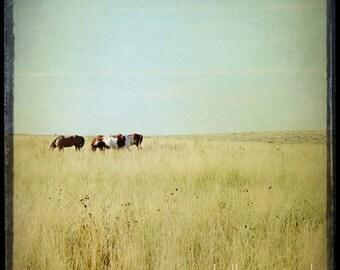 Horse Photograph, horse photography - 8x8 horse photo - nature photography, landscape, field pasture, wild horses
