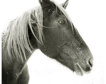 Horse Photograph, black and white horse photography, 8x8 Horse Photo, winter horse portrait, snow landscape
