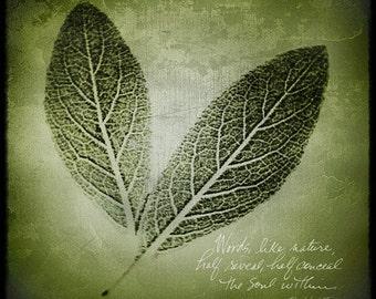 nature photography, fine art botanical photography, handwriting, leaves, green, soul poem writing