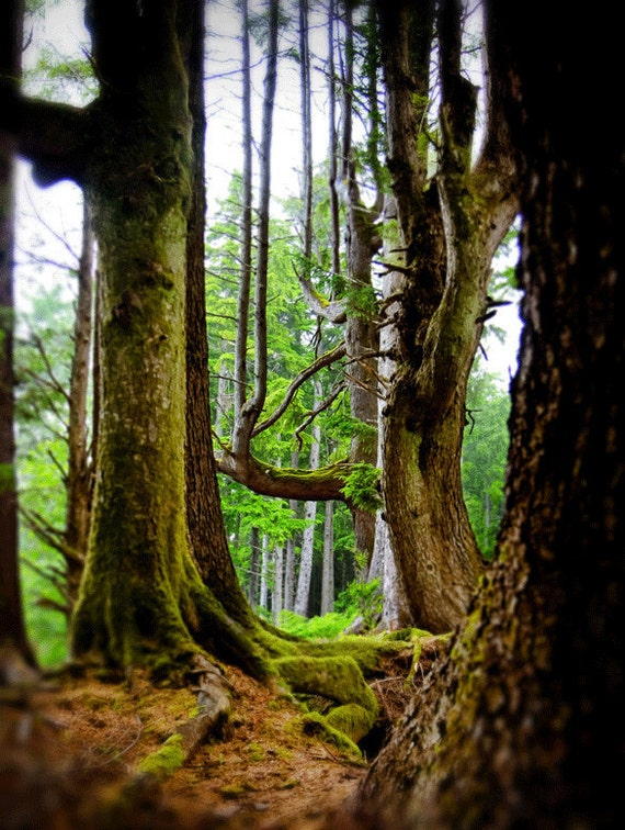 tree photography, fine art landscape photography, nature photograph woodland art