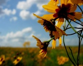Kansas Wildflowers - Fine Art Photograph 8x10