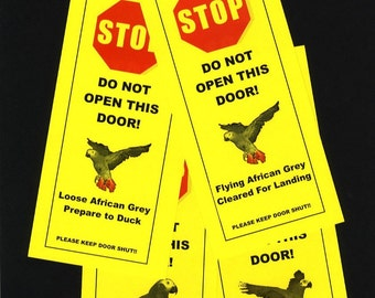 African Grey Parrot Cruising the Friendly Skies - signs keeps parrot safely indoors
