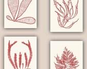 Seaweed Print in garnet red,   Set of 4, Sea Ocean Flowers, Botanical Art, Pressed seaweed Art, Wall Decor, Coastal living, Nautical art