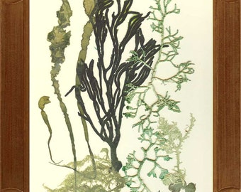 seaweed art, Original collage seaweed pressing, Natural pressed seaweed, MADE TO ORDER, Botanical seaweed artwork, beach cottage decor, 8x10
