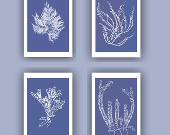 Ocean Pressed seaweed Print, Blue Sea grass  Set of 4 prints, Wall Decor,  Nautical art, Botanical Art Algae Print 5x7, beach cottage decor