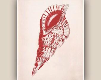 Ocean Seashell Triton Print in garnet red,  Vintage Triton sea shell print,  Marine Coastal Living, Nautical art,  Marine life art