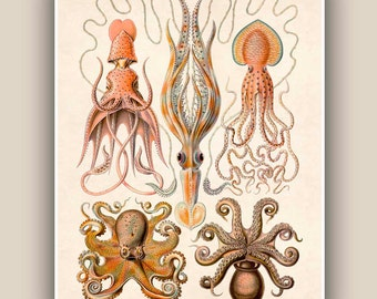 Nautical art, Cephalopods Print, octopus art, squids, sea life illustration, Seaside Print, octopus poster Marine Decor, beach cottage decor