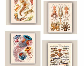 Nautical Prints, Set of 4 prints 11x14, Vintage 'Poissons', jellyfish, cephalopods, nudibranchia Seaside Prints,   Nautical art