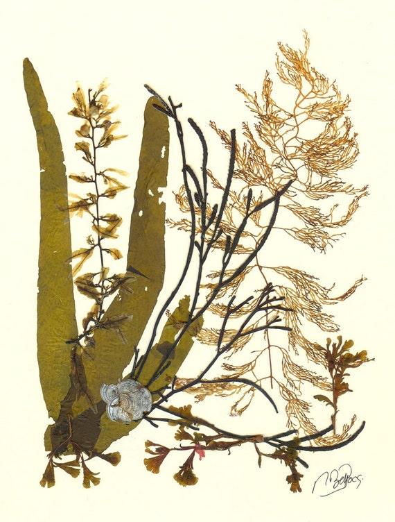 Anatomy Of Seaweed