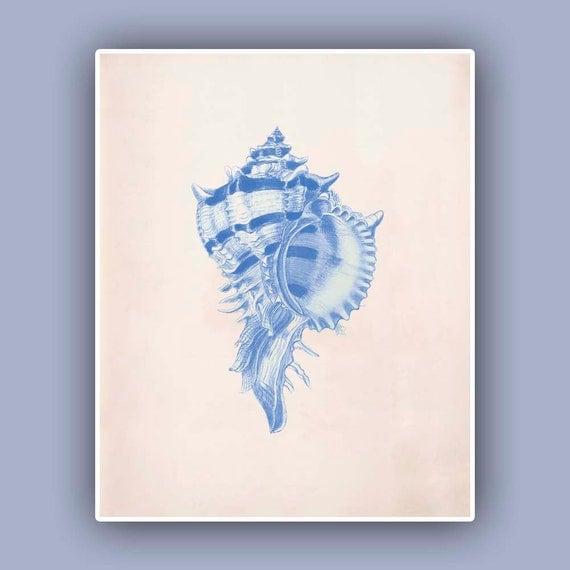 Seashell  Print,  Vintage Murex sea shell print,  Purple rock snail Print, Nautical art,  Marine Life Art, Coastal Living, blue print