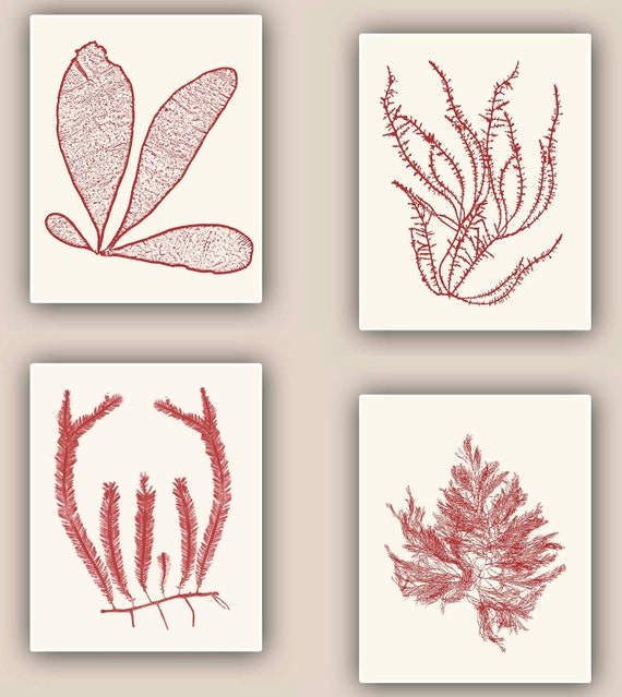 Seaweed Print in garnet red,   Set of 4, Sea Ocean Flowers, Botanical Art, Pressed seaweed Art, Wall Decor, Coastal living, Nautical art