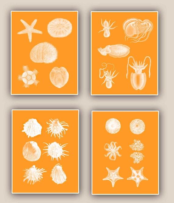Sea urchin, sea star, seashells, Squid, Ocean Creatures Print tangerine, nautical art, Coastal Living, Sea Creatures in white, 11x14