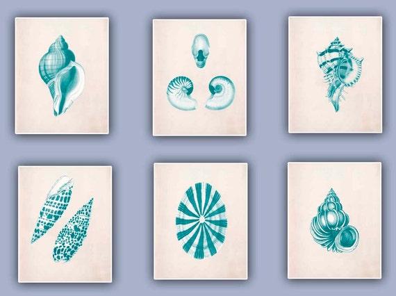 Vintage Seashells  Prints, Set of six 8x10 turquoise green prints, seashore shells, Nautical art