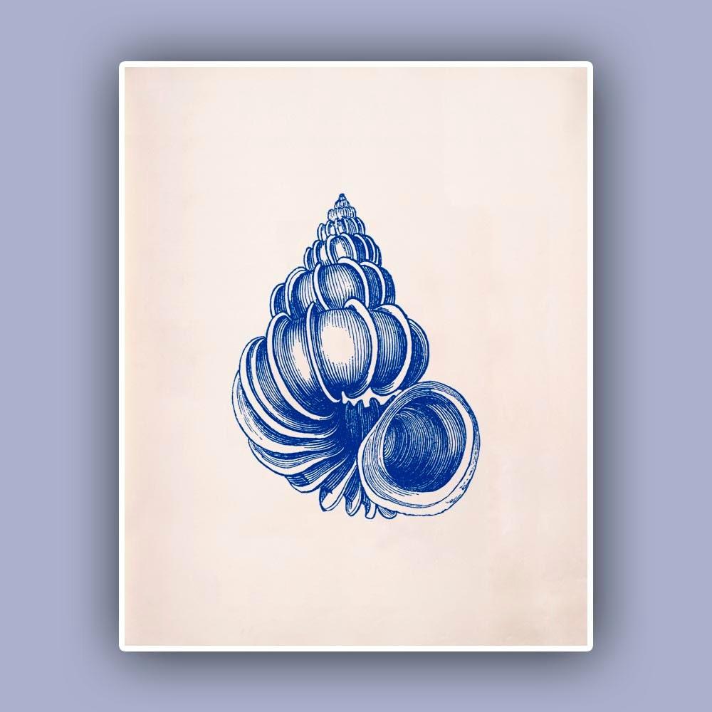 Seashell Print Wentletrap Sea Shell Print Blue Print