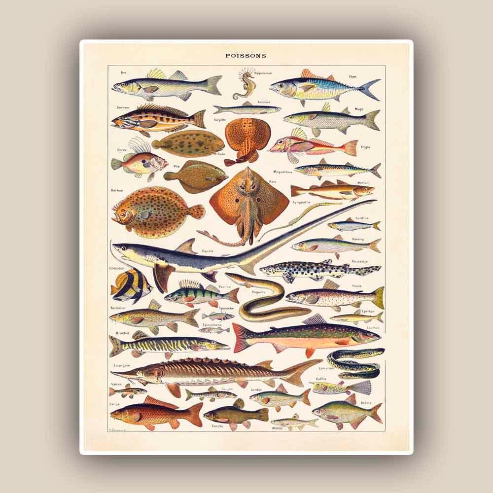 Fishes Print educational sea life print Vintage