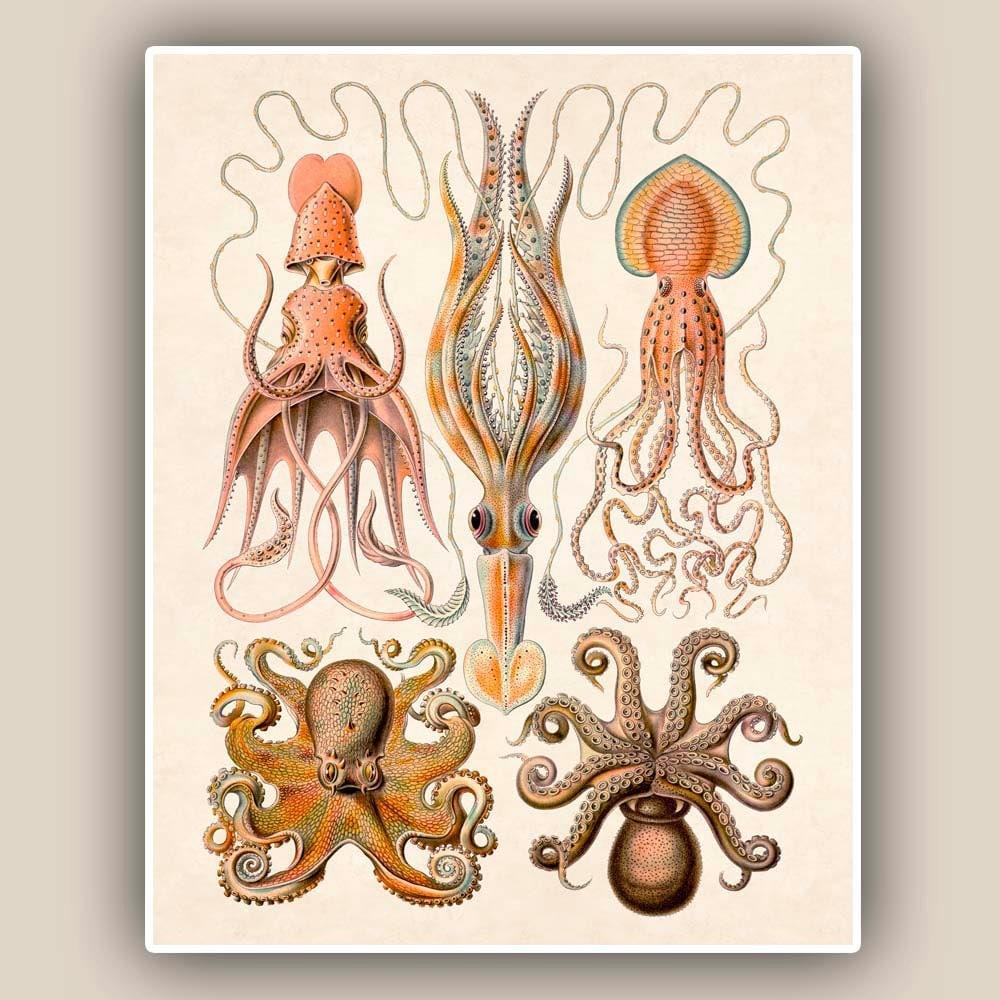 Cephalopods Print Octopus Squids Vintage Illustration