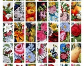 Flowers and Fruits from Vintage Hand-Colored Lithographs 1x2 inches for dominos -- Digital Collage Sheet No. 56