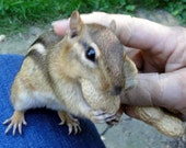 Chipmunk and  (Me-Artist) Petting It Greeting Card with Envelope Included (5x3)